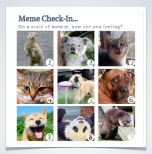 9 boxes of animal memes for emotional learning